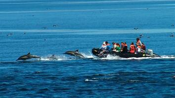 """""""Mini-Storm"""" of Dolphins Surrounds Boat"""
