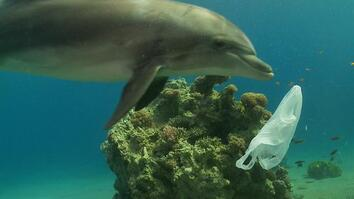 How We Can Keep Plastics Out of Our Ocean