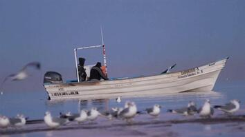 Bringing New Life to the Colorado Delta's Fisheries
