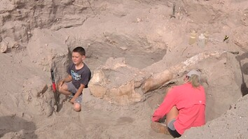 Boy Trips While Hiking, Discovers Million-Year-Old Fossil