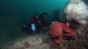 Sticky Octopus