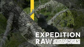 Adorable Bear Cubs Crash Campsite