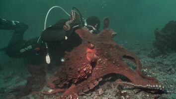 Octopus Hunting