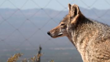 U.S.-Mexico Border Wall: Are Animals at Risk?