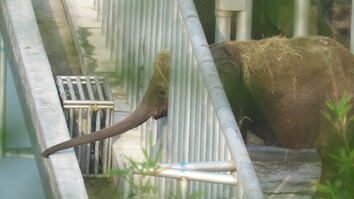 Undercover Video Shows Quarantined Elephants in Distress