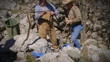 Searching for Diamondbacks