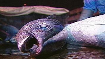 Declining Fish