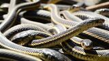 If You're Scared of Snakes, Don't Watch This