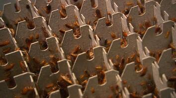 Bugs on a Platter