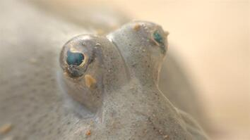 Iran's Protected Island: Home to Mudskippers, Mangroves, and More