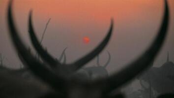 NG Live!: NG Live Bonus: Dinka Cattle Camp: Southern Sudan