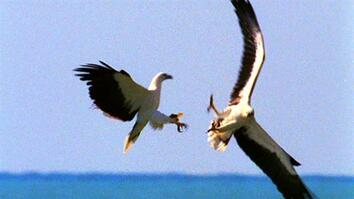 World's Deadliest: Midair Eagle Fight