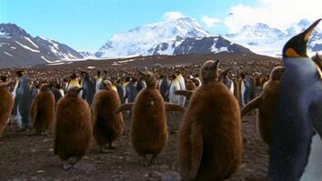 World's Weirdest: Penguin Parent Powers