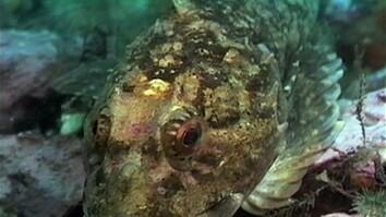 Deep Sea Robo-Help