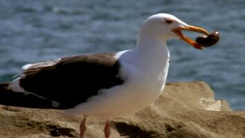 The Ingenious Seagull