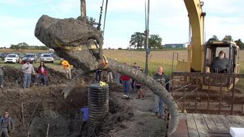 Farmer Finds Woolly Mammoth Bones in Michigan