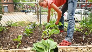 Urban Gardeners Grow Crops in Spare Spaces