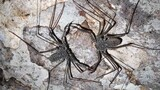 Watch: Cannibal 'Scorpions' Fight