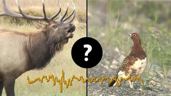 You'll Never Guess Which Animals Make These Sounds