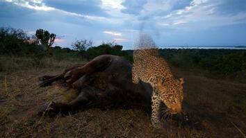 NG Live!: Joel Sartore: Capturing Endangered Species