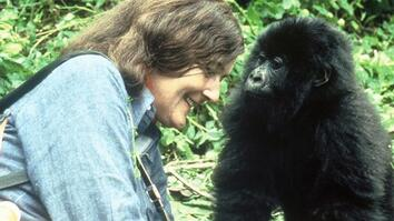 Mountain Gorillas' Survival: Dian Fossey's Legacy Lives On