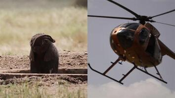 Baby Elephant Stuck in a Watering Hole? 