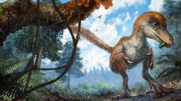 Remarkably Preserved Dinosaur Feathered Tail Discovered in Amber
