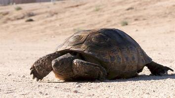 The Tortoise and the Solar Plant