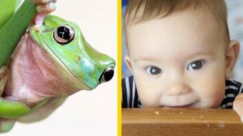 What Does a Frog's Face Have in Common With Yours?