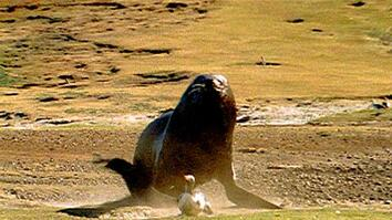 Penguin vs. Sea Lion