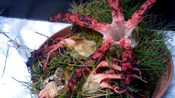 This Sprouting, Octopus-like Fungus Is the Stuff of Nightmares