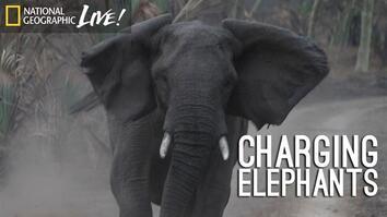 A Park Reborn: Charging Elephants