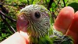Do Parrots Name Their Babies?