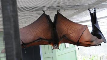 How Do Bats Land Upside Down?