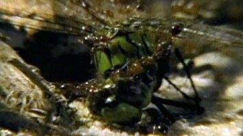 Fire Ants Swarm