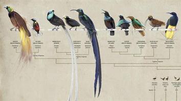 NG Live!: Naming the Birds of Paradise