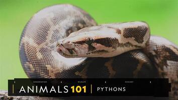 Pythons 101