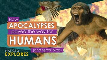 How apocalypses paved the way for humans (and terror birds)