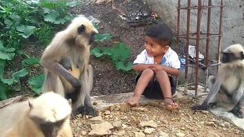 Boy and Wild Monkeys Make Unlikely Friends