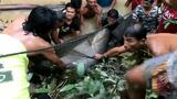 440-Pound Giant Catfish Saved by Villagers