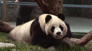 Giant Panda Reserve
