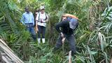 These peatlands could be critical to fighting climate change