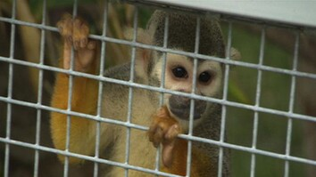 Former Pet Primates Find Haven