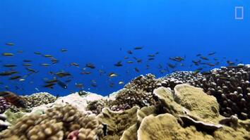 "Rising Ocean Temperatures are ""Cooking"" Coral Reefs"