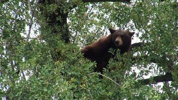 Bear in the Neighborhood