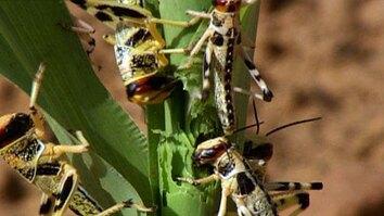 Locust Research