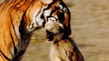 World's Deadliest: Tiger vs. Monkeys