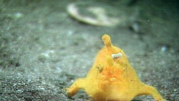 Strange Japanese Sea Creatures