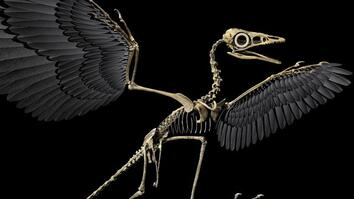 Are Birds Modern-Day Dinosaurs?