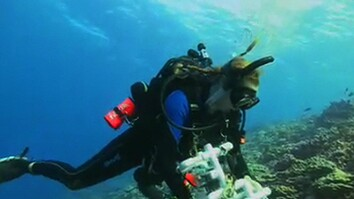 A Survey of Flint Island's Coral Reefs